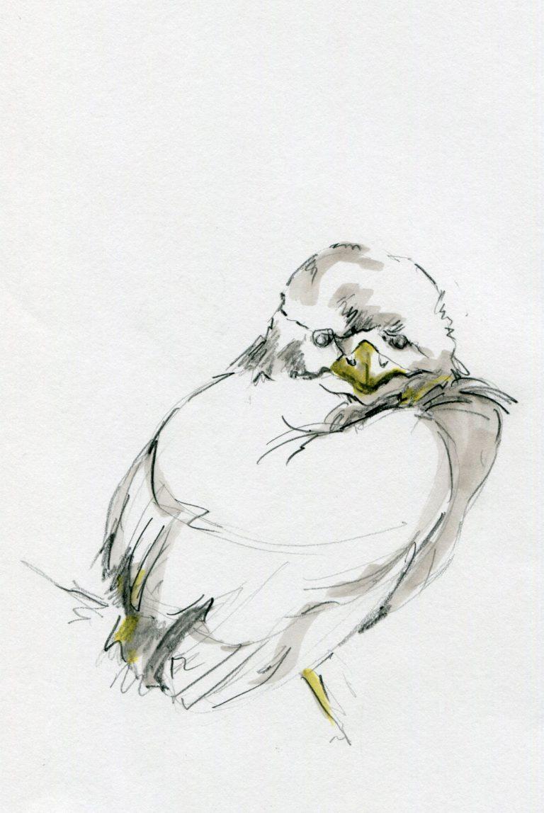 alexandra-behr-04
